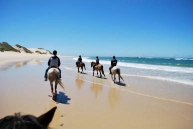 Прогулки на лошадях по побережью1