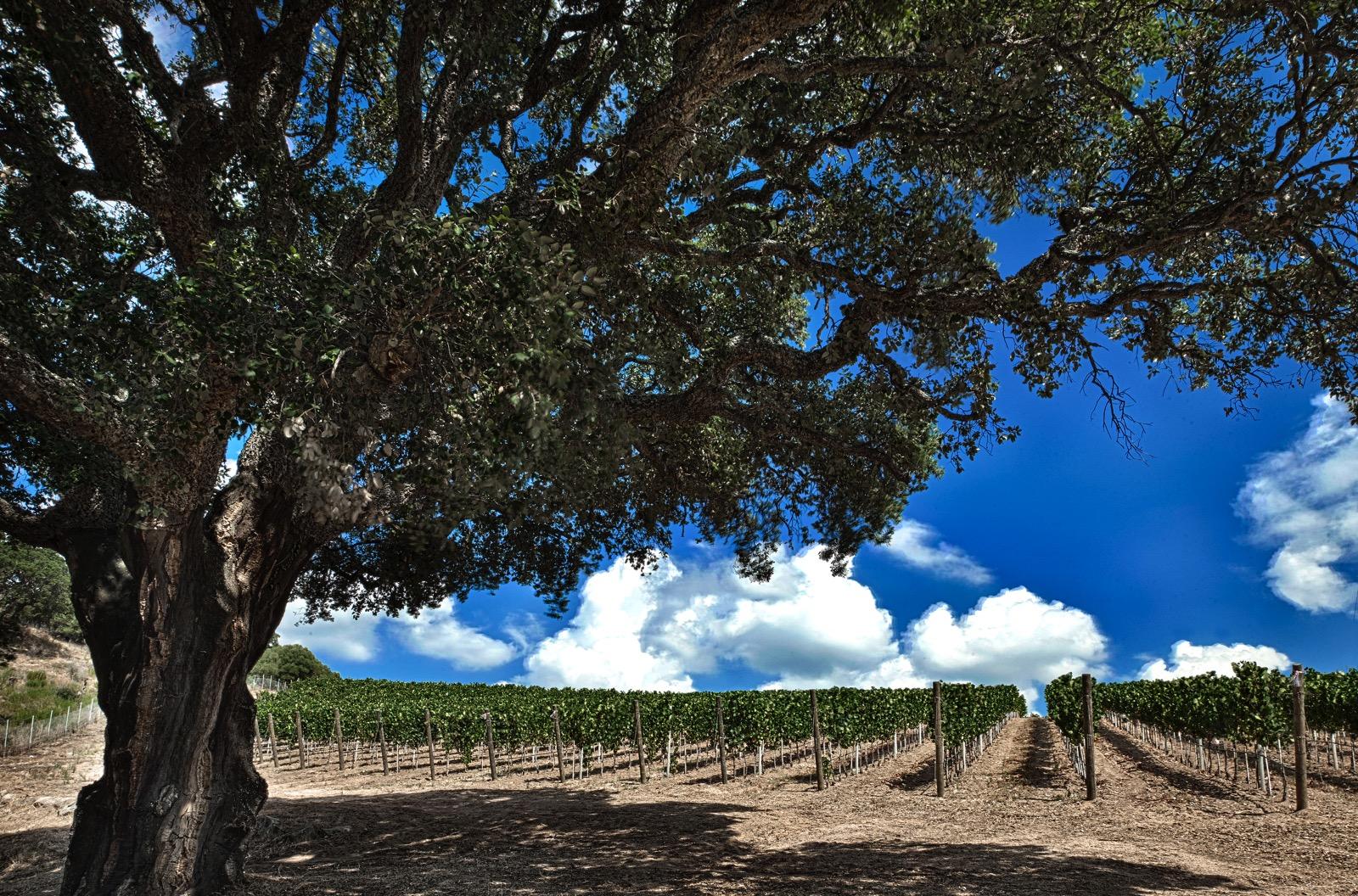 vini-sardegna (2)