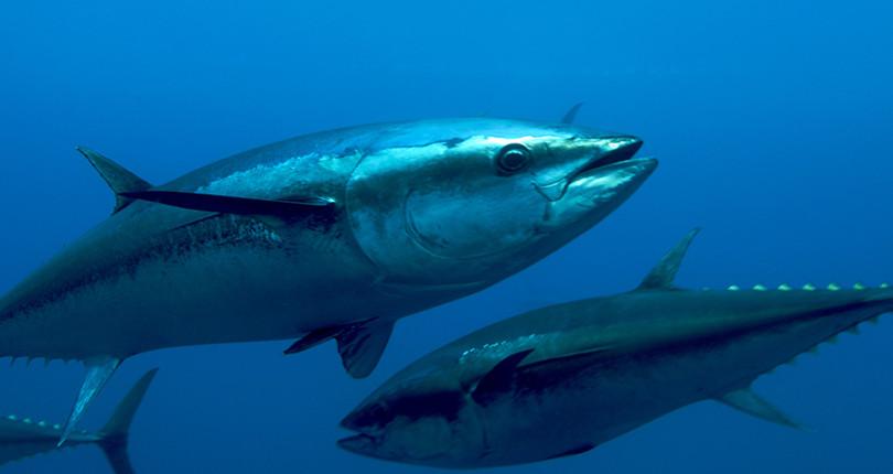 Спортивная и глубоководная рыбалка на Сардинии