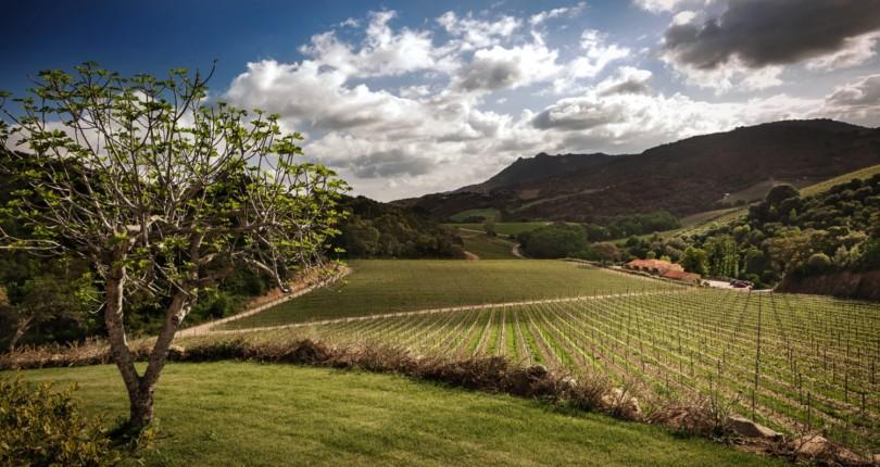 Сардиния земля вина